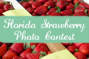 FSGA-Photo-Contest-Blog