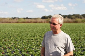 A Florida Strawberry Harvest Tour at Mike Lott's farm in 2012